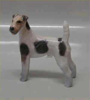 ruhaaret fox terrier